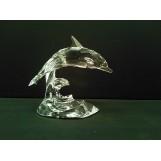 Dolfijn op golf